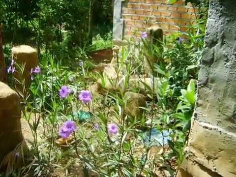 Đi chơi vườn lan rừng Troh Bư mùa hoa Muồng hòang yến