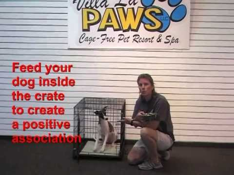 Training Tip: How to Crate Train Your Dog