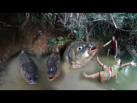 Primitive Life - Primitive Fishing Skills Catch Fish By Hand In Mud Hole Underground For Survival