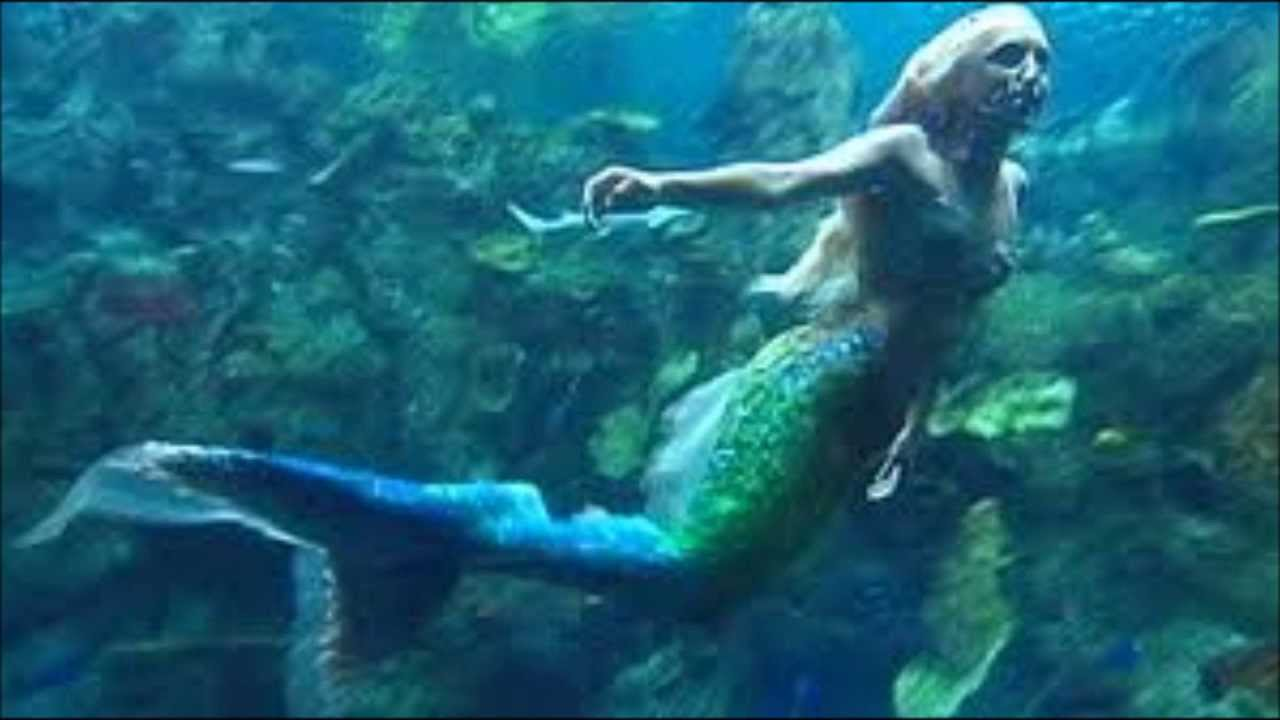 the real mermaids In the wake of the 2004 tsunami, pictures of fiji mermaids circulated on the internet as supposed examples of items that had washed up amid the devastation, though they were no more real than barnum's exhibit.