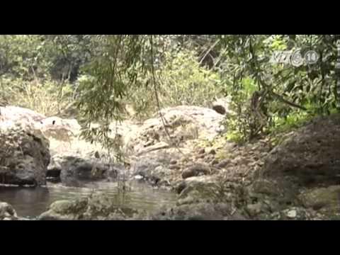 VTC14_Khám phá rừng Khe Rỗ