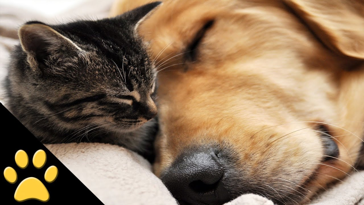 Cutest cat and dog video ever youtube Can a dog tell if another dog is sick