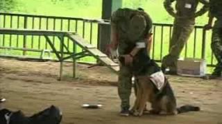 Đột nhập trung tâm huấn luyện chó uy tín chuyên nghiệp nhất tại Hà Nội