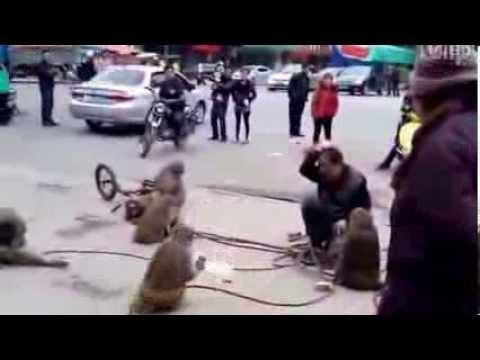 Khỉ đánh nhau với người