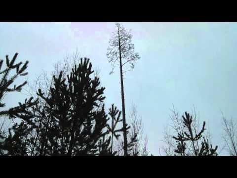 Deadwood fall