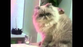 Najzákernejšia mačka