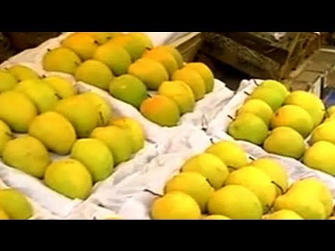 Why European Union's ban on Alphonso Mangoes is a Sweet Deal for Indian Buyers