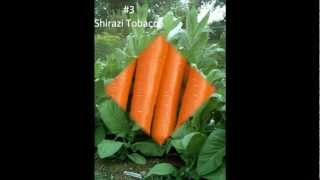 FREE Vegetable Seeds For YOU!