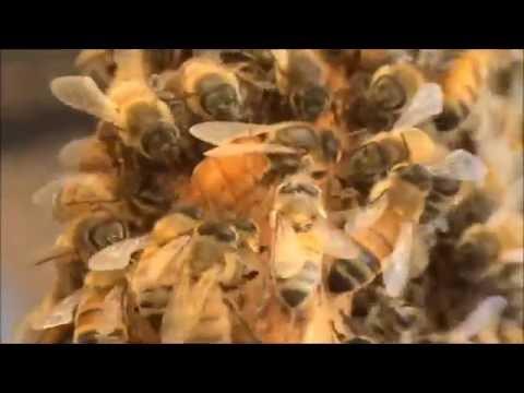 Beekeeping: A Huge Swarm Turning Up Update.