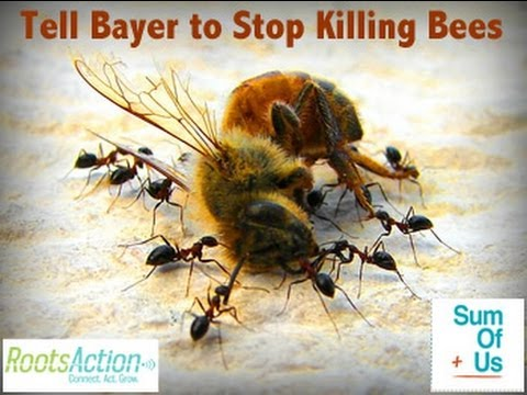 Save The Bees, Stop Selling Neonicotinoids