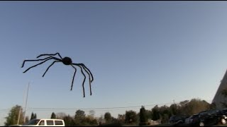 Scary Flying Spider Prank!