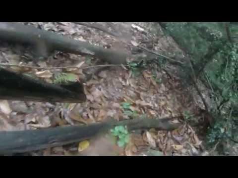 Caccia al Cinghiale nel Calcinaio - Alta Versilia - Browning 30.06 caliber