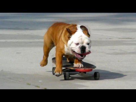 Pes mistr skateboardu! :-O