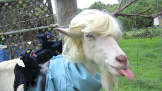 [Funny Game of Thrones aka Goat of Thrones] Video