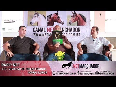 #13 PAPO NET - BRENO PATRUS DO HARAS LUXOR - MANGALARGA MARCHADOR