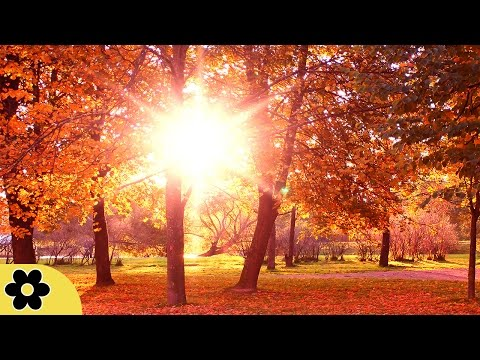 Reiki Music, Relaxing Music, Calming Music, Stress Relief Music, Peaceful Music, Relax, ✿3166C