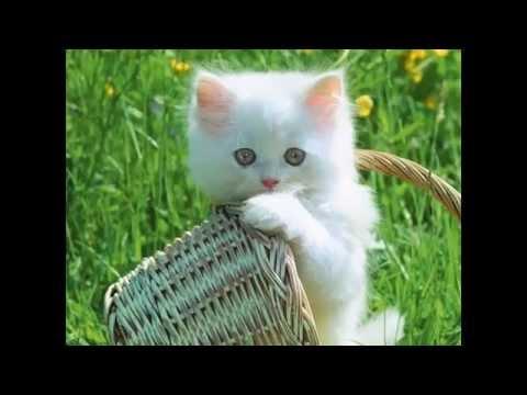 Những hình ảnh về con vật đẹp nhất