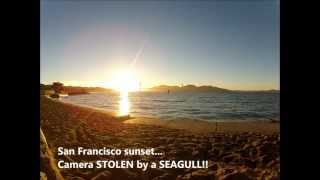 GoPro STOLEN by a SEAGULL!