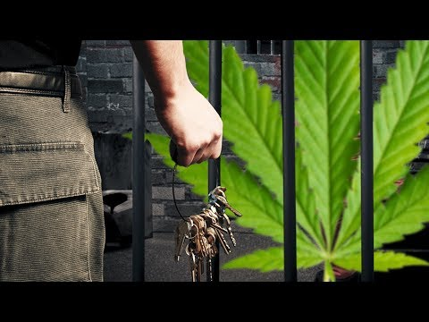 Overturning Pot Convictions In Colorado - A Step Closer To Sanity