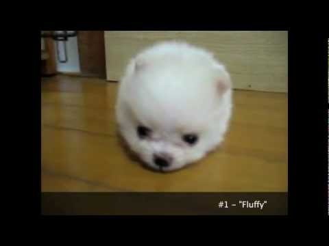 Cuteness Overload: Cutest Puppies Ever Seen on Video