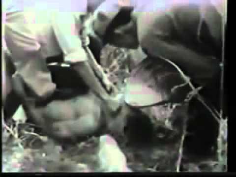 ngụy quân VNCH tra tấn dã man 1