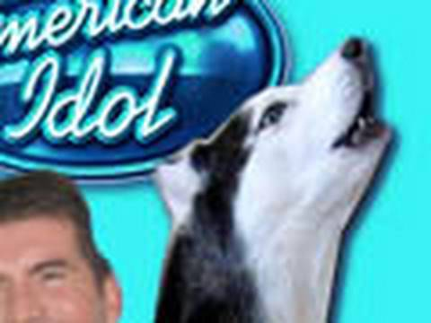 Mishka the Singing Husky Dog American Idol Audition - Whitney Houston, Click this link to see more Mishka videos→http://www.youtube.com/gardea23 Mishka's Facebook: http://www.facebook.com/pages/Mishka-the-Talking-Husky/105928132...