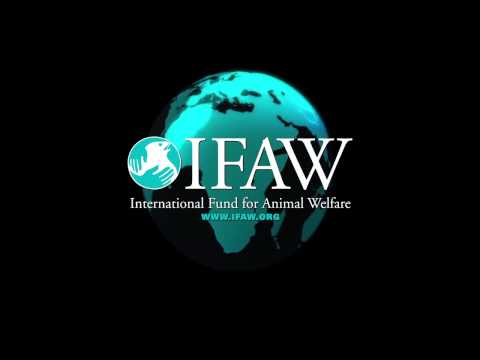 IFAW International Whaling Commission Update   Day One