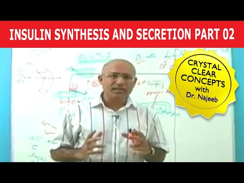 Insulin Synthesis and Secretion 2/4 - Biochemistry - USMLE Step 1