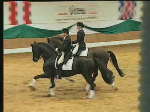 HOHENSTEIN: Trakehner stallion by www.equine-evolution.com