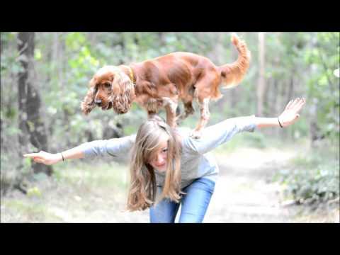 Amazing cocker spaniel Scooby - tricks & agility
