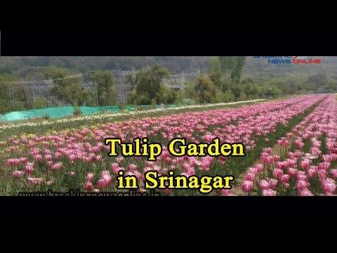 Tulip Garden in Srinagar