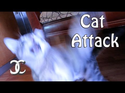 Attacked by a Cat(Vlog)