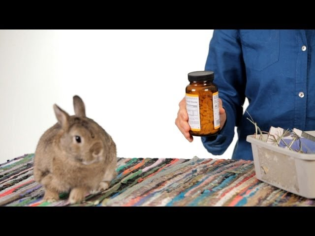 How to Get a Rabbit Back in Its Cage | Pet Rabbits