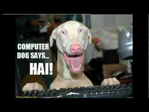 50 Funny Dog Faces Compilation, 50 Funny Pets And Funny Animals 2012