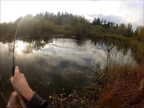 Hauen kalastusta heittoperholla.