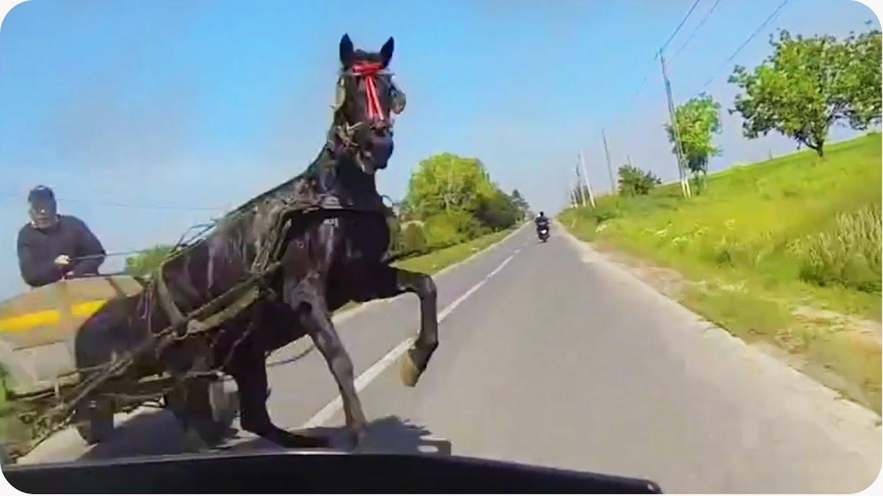 Le cheval qui n'aimait pas les motards