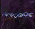 HIV Replication