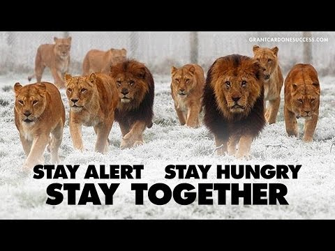 Stay Alert and Stay Hungry - CardoneZone