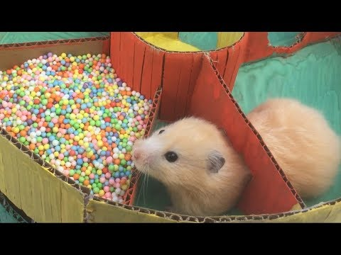 Funny Hamster Jerry in 6-Level  Round Maze