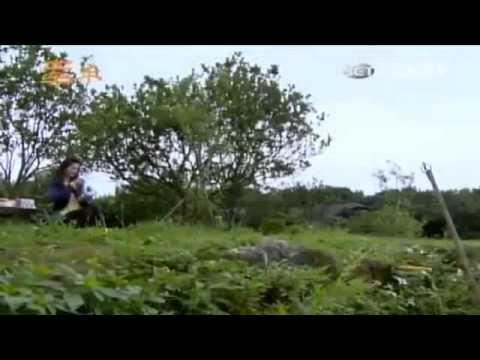 Phim Tay Trong Tay - Tập 338 Full - Phim Đài Loan Online