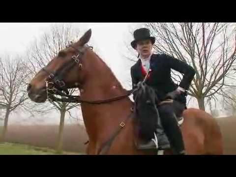 riding horse dildo