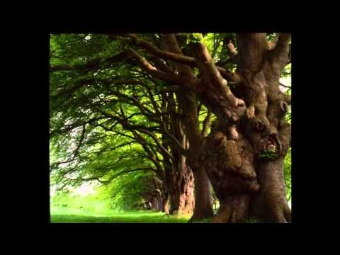 Old Trees Grow Faster With Every Year
