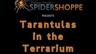 Tarantulas In The Terrarium (An Instructional Film By