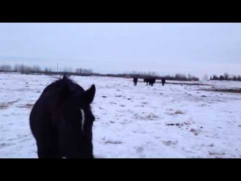 The mares coming in for cubes in -40