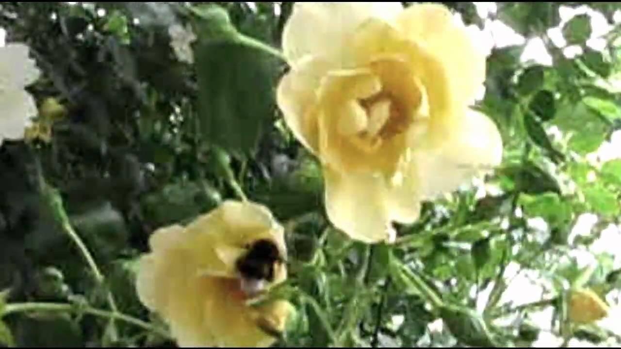 Les Sunlights Les Roses Blanches - Mon Cœur Est Un Coffret