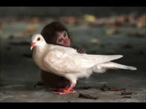 Somos catecúmenos perante a sua alma de anjo …