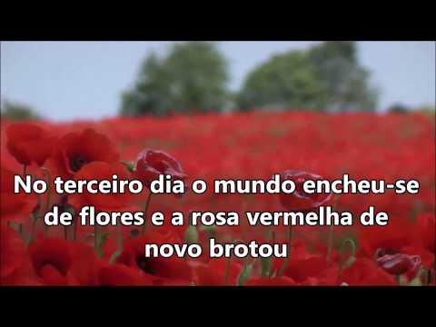 Rosa Vermelha  Play Back Luis de Carvalho