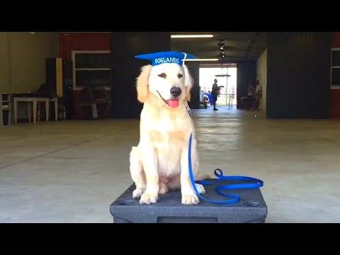 Super Cooper Sunday #10 - GRADUATING PUPPY CLASS