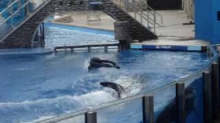Show De Baleias Sea World Disney