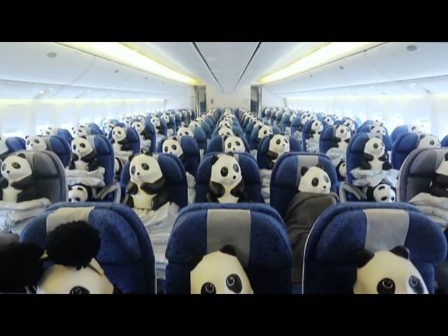 1600只熊貓進擊香港!好可愛。。。